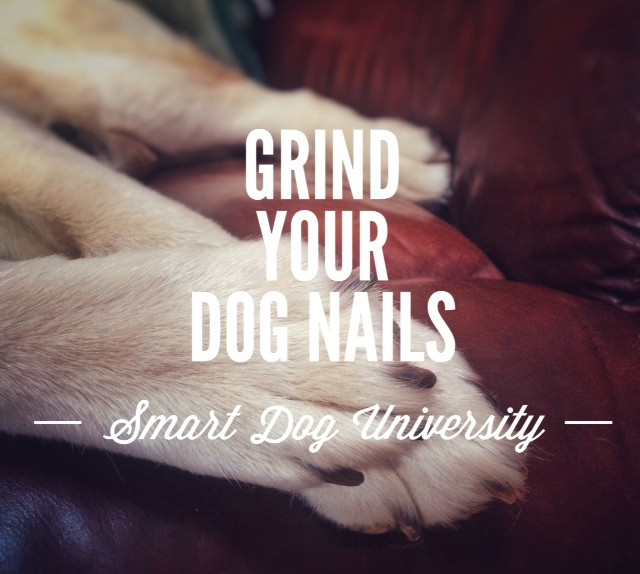 Dog Nail Trims Part 5: How to Trim Your Dog's Nails with the Dremel – Video