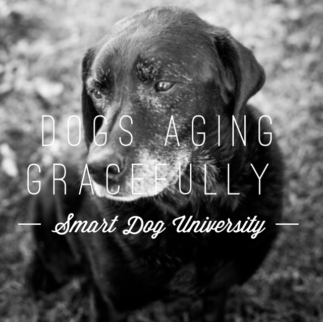 Aging Gracefully (Your Dog. Not You.)