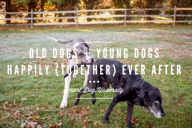 young dog with old dog, older dog, dog training, dog obedience, clicker, Frederick, Mt. Airy, puppy training