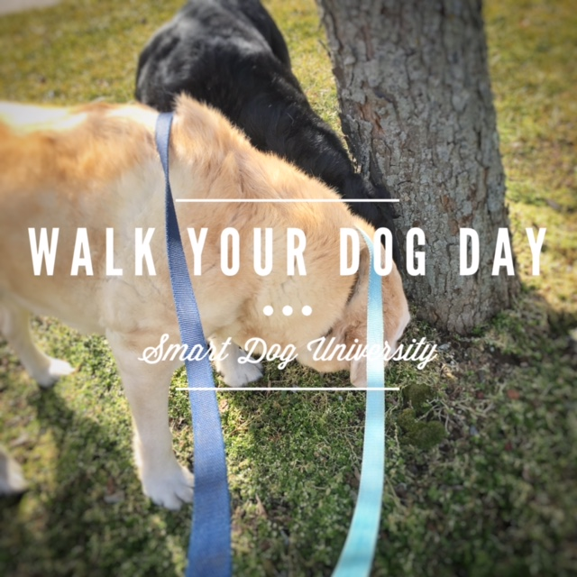 walk your dog day, labrador, yellow lab, black lab, loose leash, dog training, dog obedience, dog walks, clicker, Frederick, Mt. Airy, Smart Dog