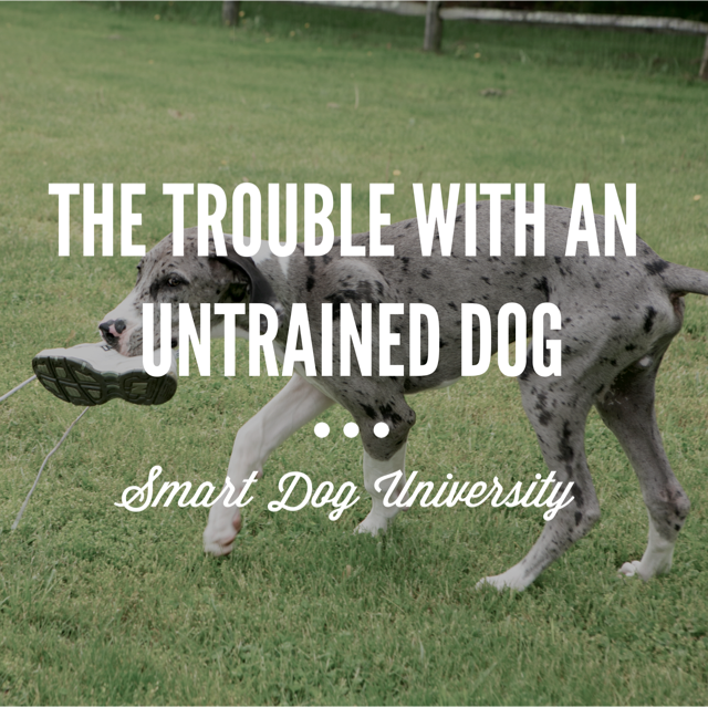 untrained dog, dog training, puppy training, dog obedience, dog manners, Smart Dog University, Frederick, Mount Airy, Mt. Airy, clicker