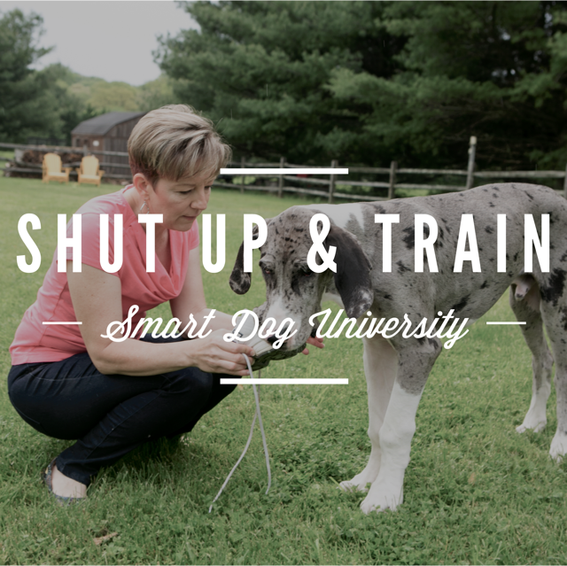 shut up and train, dog training, puppy training, dog training excuses, clicker, positive, Frederick, Mt. Airy, clicker, dog obedience, Smart Dog University