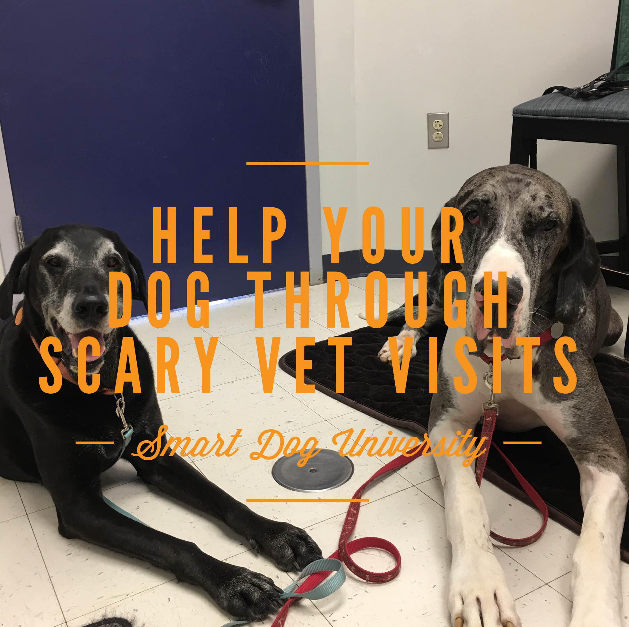 scary veterinary visits, dog training, vet visits, puppy training, scary vet, scared dog, Smart Dog University, clicker, positive, Frederick, Mt. Airy MD