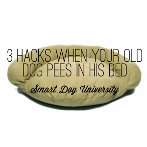 Admirable 3 Hacks When Your Old Dog Pees In His Bed Smart Dog University Frankydiablos Diy Chair Ideas Frankydiabloscom