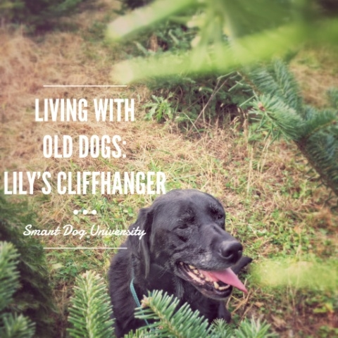 Living with Old Dogs: Lily's Cliffhanger