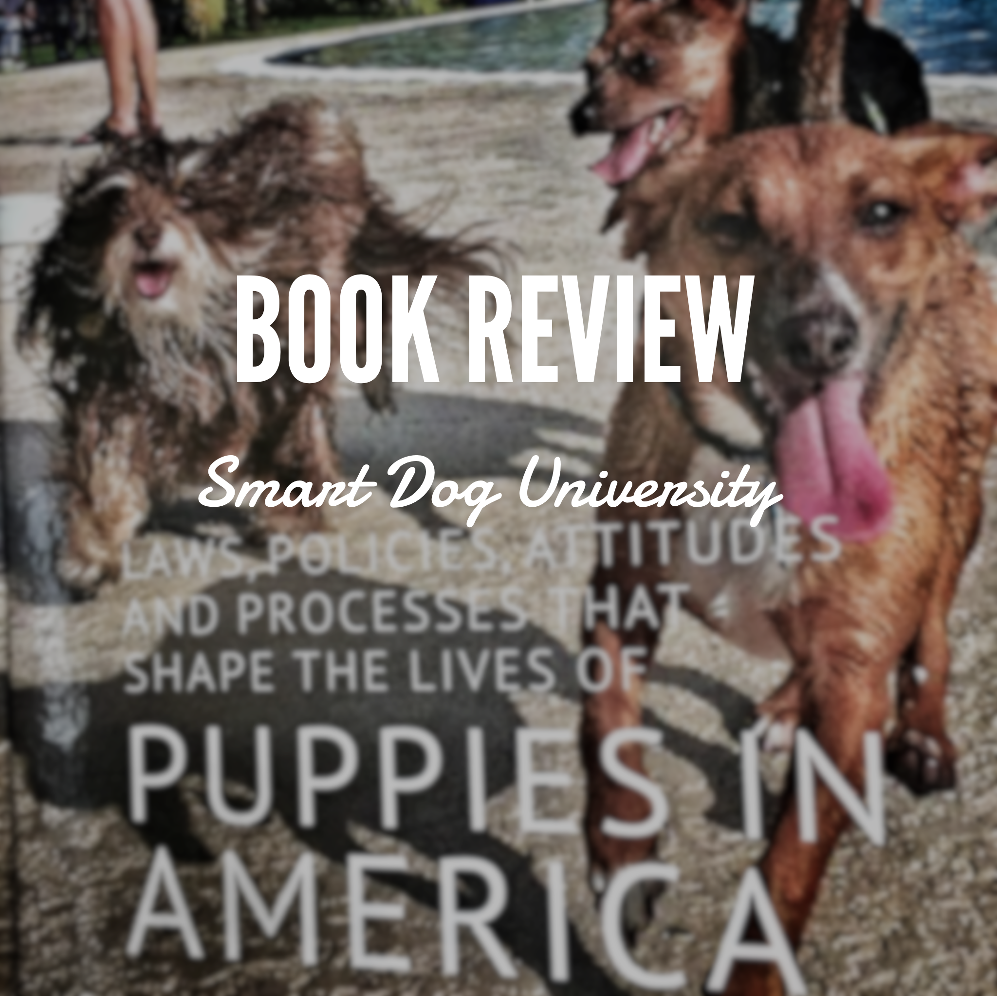 Book review, smart dog university, Frederick, Mount Airy, Maryland, dog training, clicker