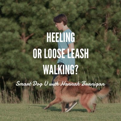 Heeling, Loose Leash Walking, clicker training, Smart Dog University