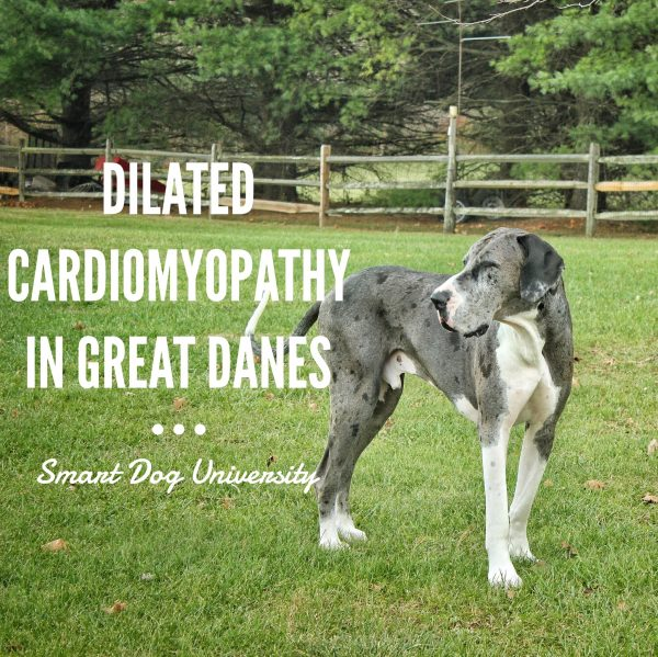R Great Danes Smart Dilated Cardiom...