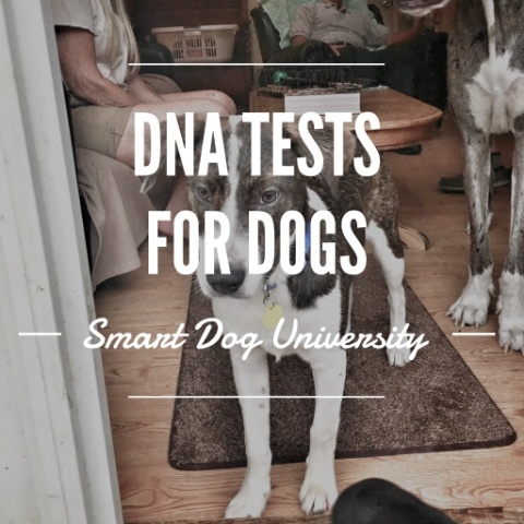 DNA test, DNA testing, dog DNA test