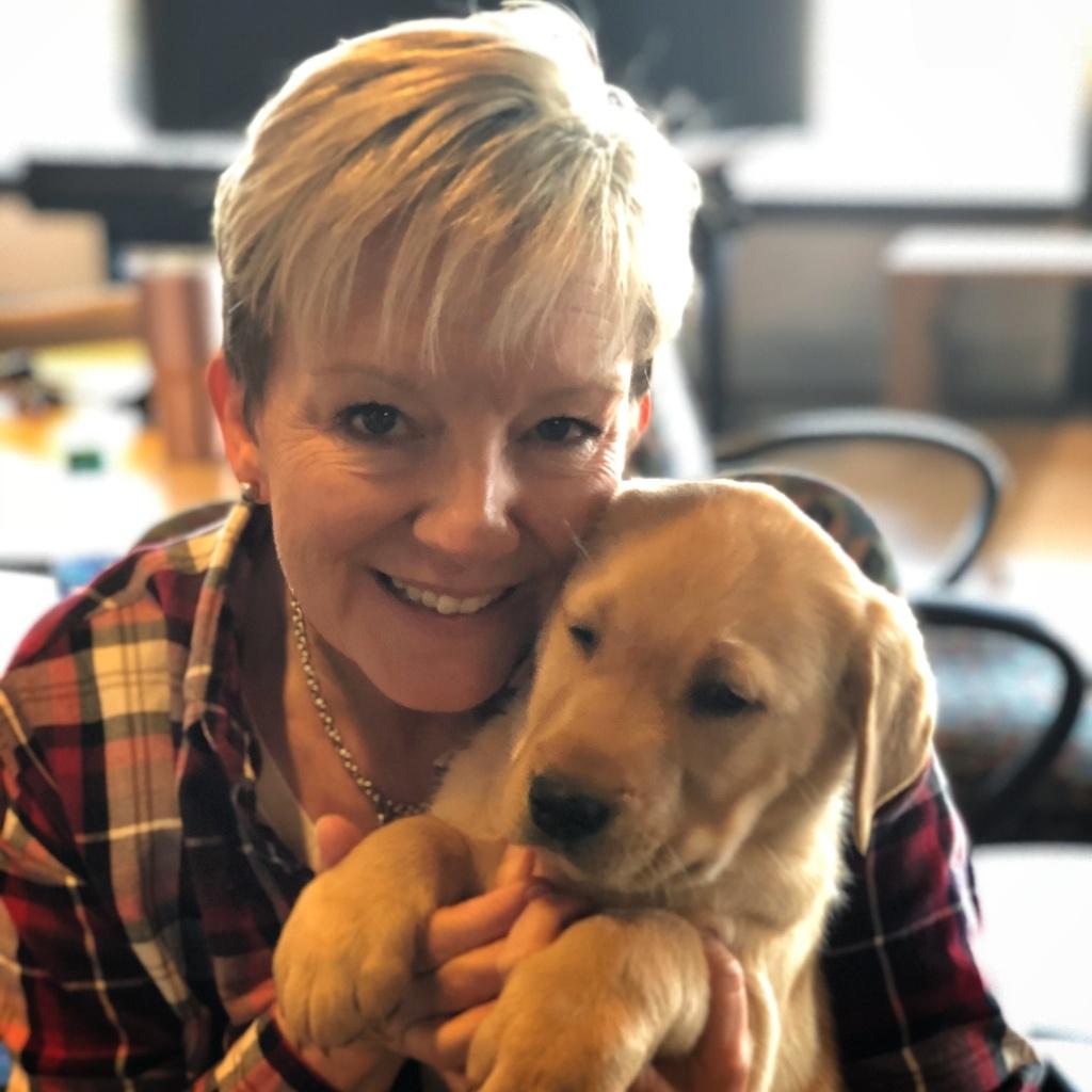 yellow Labrador, yellow Lab, service dog in training