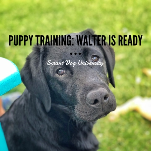 Puppy Training: Walter's Ready for His Family